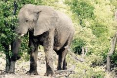 Elephant-2_resize