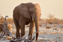 Elephant-3_resize
