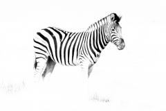Zebra_resize